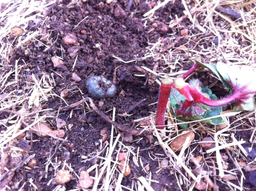 Cutworms are a serious problem in my garden!