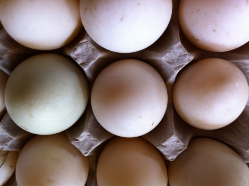 A picture of duck eggs