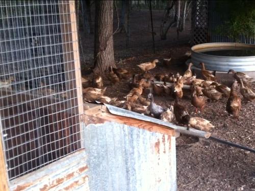 Duck Nesting Area