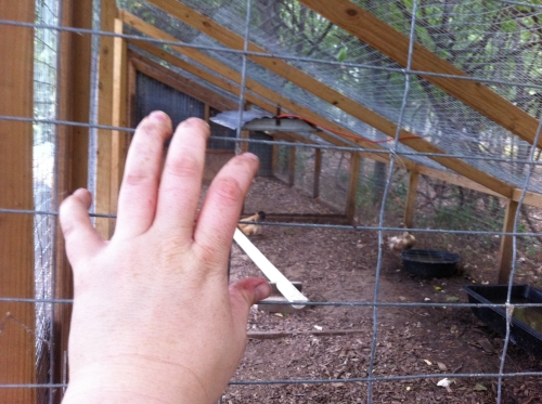 Wire mesh on duck enclosure